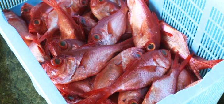 漁師町の新鮮な金目鯛を干物で食す