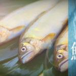 天然アユの産地がおすすめする、おいしい鮎の食べ方